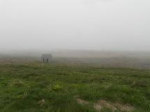 La lande dans la brume