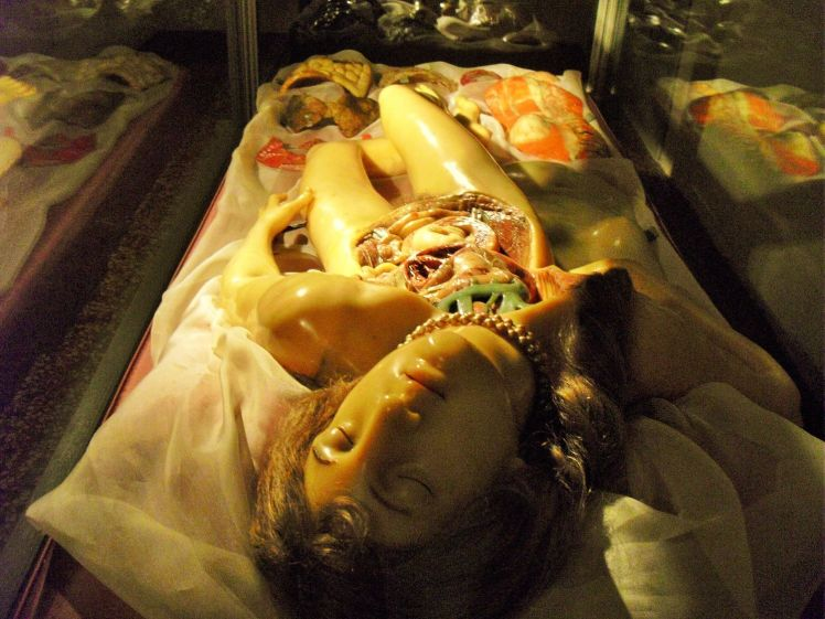 venus-anatomique-blog