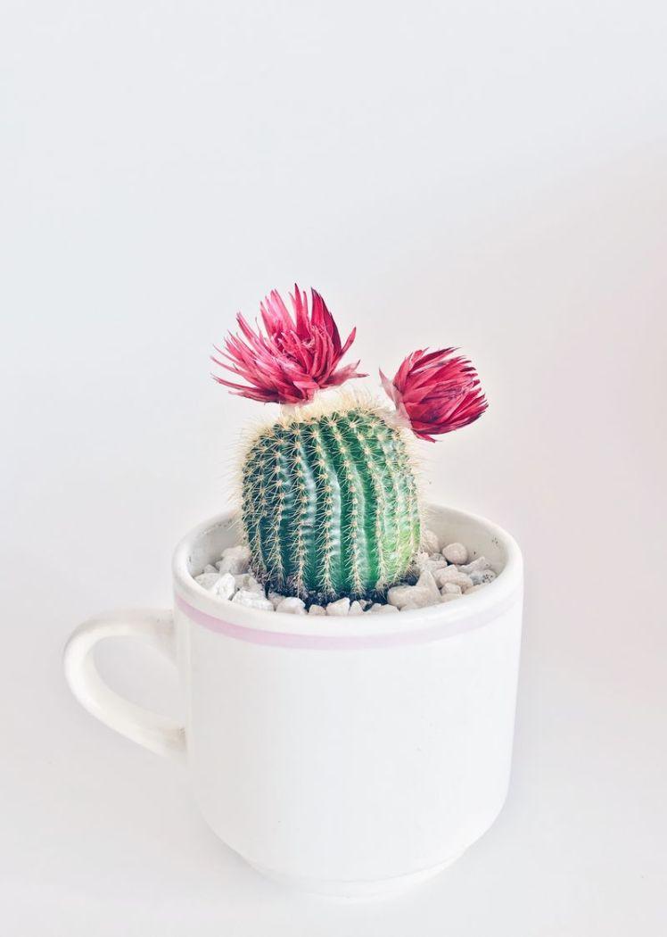 cup-mug-cactus